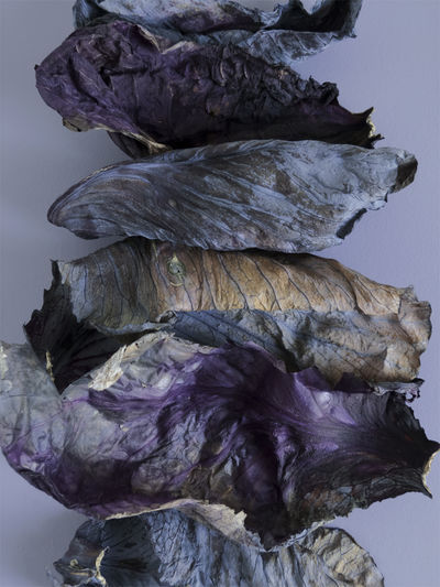 Wilted, but not wasted Wabi-sabi Decayed Beauty Still Life Food Foodism360 Flatlay Cabbage Leafs 🍃 Ultraviolet Simplicity Lavender Wrinkled Purple Wilted Plant Dried Wilted The Still Life Photographer - 2018 EyeEm Awards