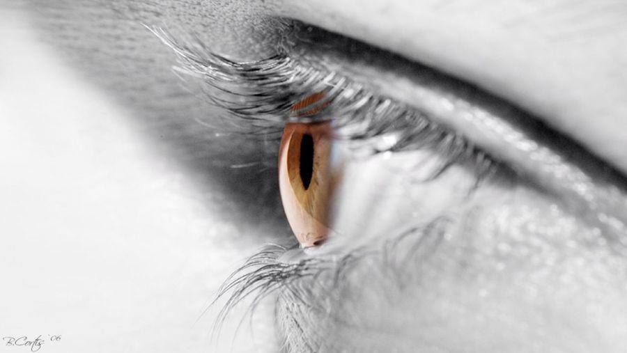 Eye Macro Closeup © b.cortis www.cortis.info