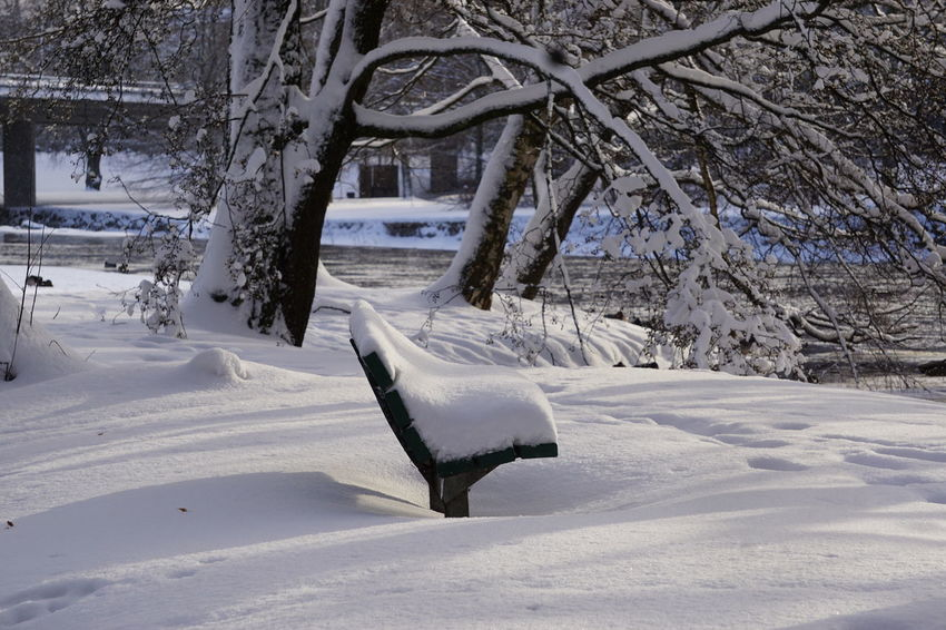 Have A Seat Resting Place Gavleån Fluffy Bench Snow Cold Temperature Winter Landscape Weather White Color Frozen No People Branch Outdoors Day Tree Nature Tranquil Scene
