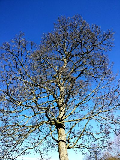 Tree Trees Blue