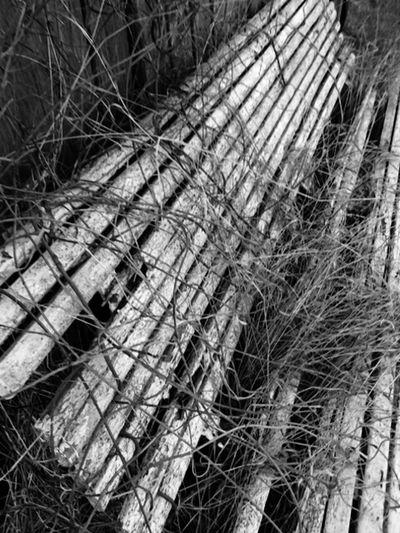 Experimenting Black & White Pure Photo No Edits