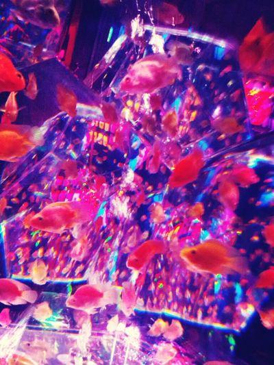 Art Aqualium