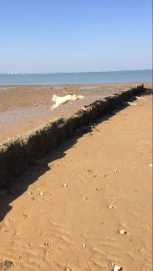 Feeling free. Beach Sea Nature Outdoors No People Sand First Eyeem Photo