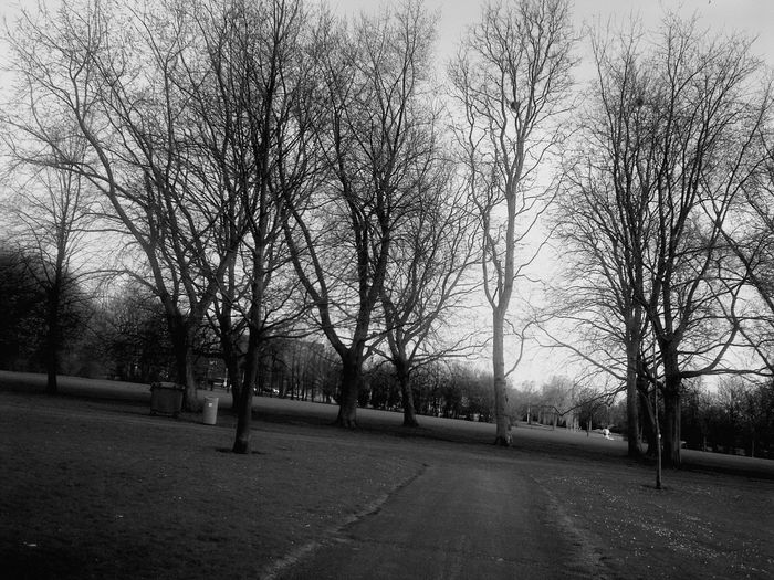 Tree Bare Tree Grass Sky Tranquility Outdoors Park No People The Week On EyeEm in Blijdorp Rotterdam The Netherland❤