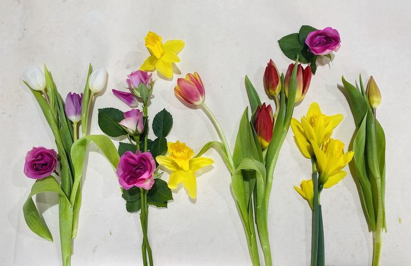 Close-up of multi colored tulips in vase against wall
