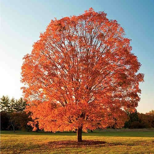 ArborWorks, Inc., 3270 South Bridgepointe Lane, Dublin, CA 94568, (925) 828-8733 http://arborworksinc.com/tree-pruning-dublin/ First Eyeem Photo