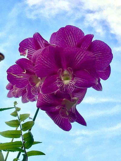 Orchids EyeEm