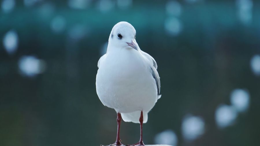 Bird Animal Wildlife One Animal Winter Nature Mourning Dove Feather  Outdoors Animals In The Wild Beauty In Nature No People Day Perching Close-up