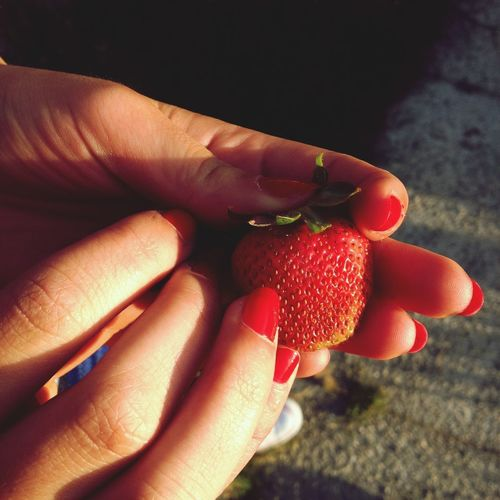 Red Food Sunlight Strawberry