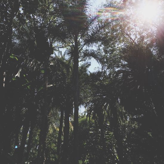 Palm Trees Looking Up Sunshine Jungle Backyard Gardens California Nature Photography Glendale