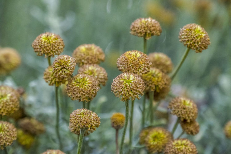 Close-up Flower Plant Flowering Plant Growth Beauty In Nature Freshness Fragility Vulnerability  Focus On Foreground Flower Head Inflorescence Day No People Nature Selective Focus Green Color Botany Outdoors Petal