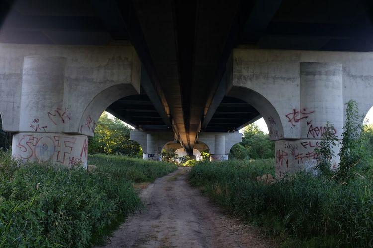 Pathway amidst plants below bridge