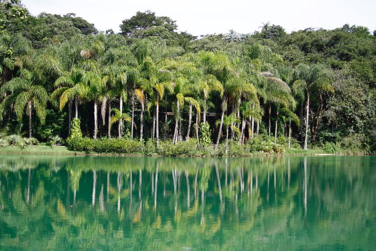 Green Tree Water Plant Reflection Lake Growth Beauty In Nature Green Color Nature Tranquility Lush Foliage Scenics - Nature Tranquil Scene Waterfront Idyllic No People Day Outdoors Non-urban Scene