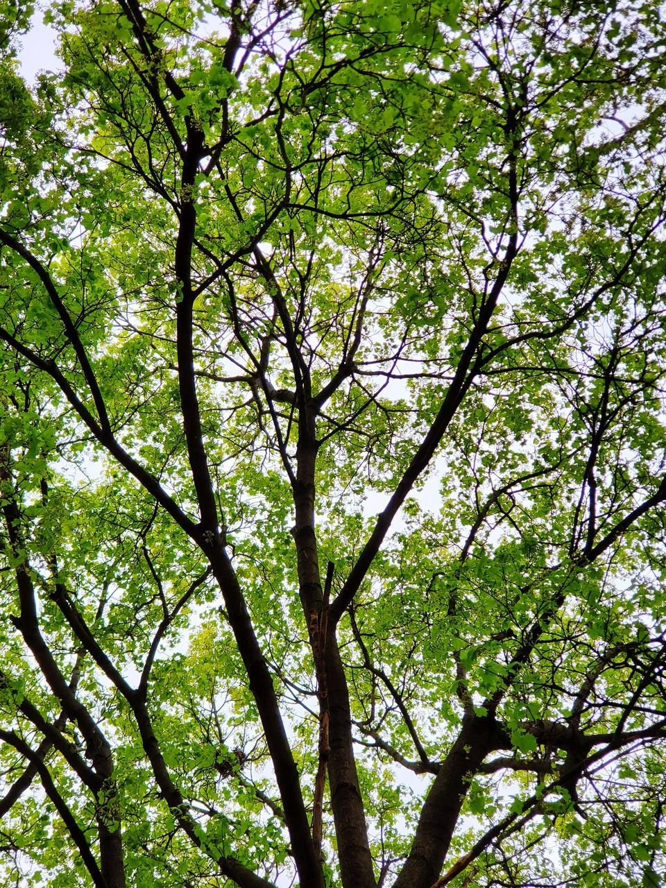 LOW ANGLE VIEW OF TREE IN FOREST