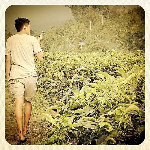 Tehndorodongker Sukuh Senja  Greenoftheday