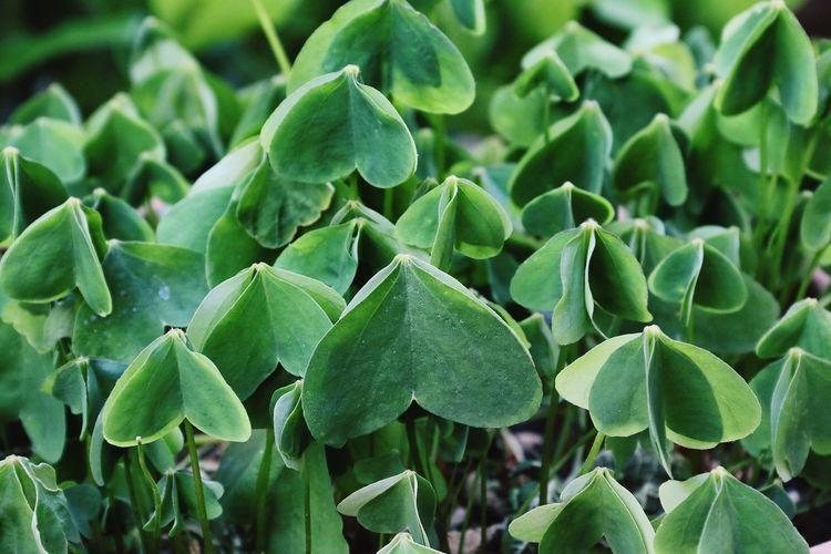 Full frame shot of succulent plant on field