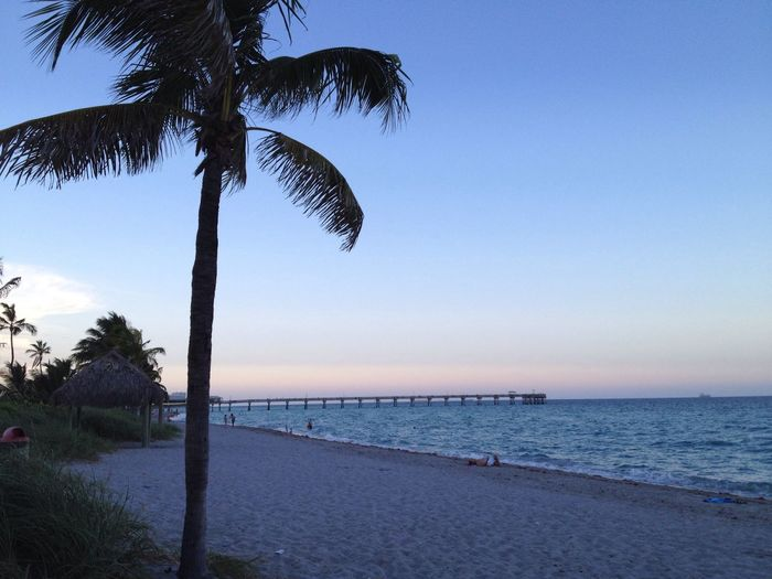 Palm Tree Water Beach Tranquil Scene Sunset Tranquility Vacations Dania Beach Florida Life Florida Shore Horizon Over Water Silhouette Vacation Pier