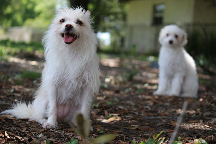 Animal Day Dog Dogs Focus On Foreground Mammal Nature No People Outdoors Selective Focus White White Color