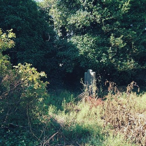 A grave that nature has claimed Kells Nexus5 Vscocam