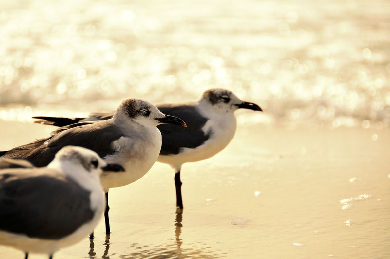 Animals In The Wild Bird Close-up Closed Eyes Day Gulf Of Mexico No People One Direction Outdoors Sea Gulls Water Sea Shore Florida Nature