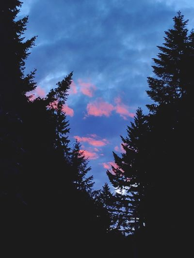 Tree Low Angle View Sky Cloud - Sky No People Silhouette Pinaceae Outdoors Nature Day EyeEm Sunsets Pink Clouds Amazing Beauty Mystical Beautiful Google Pixel Dramatic Sky Sunset PNW Sunsets! Rich Colors