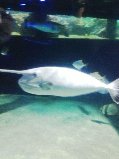 Unicorn Fish 😍❤️