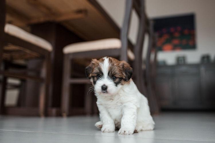 A small puppy