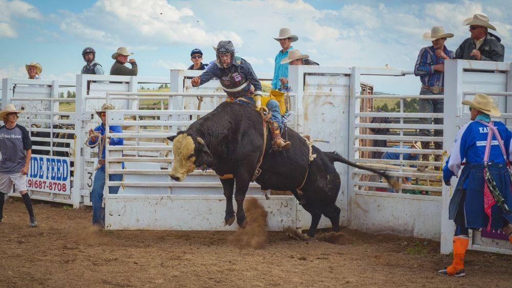 Bull Bullriding Working Animal Mammal Outdoors People Men Sky Day Cowboy