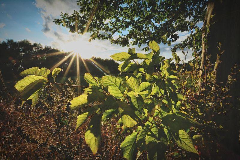 Tree Sunlight Leaf Sun Sky Green Color Close-up