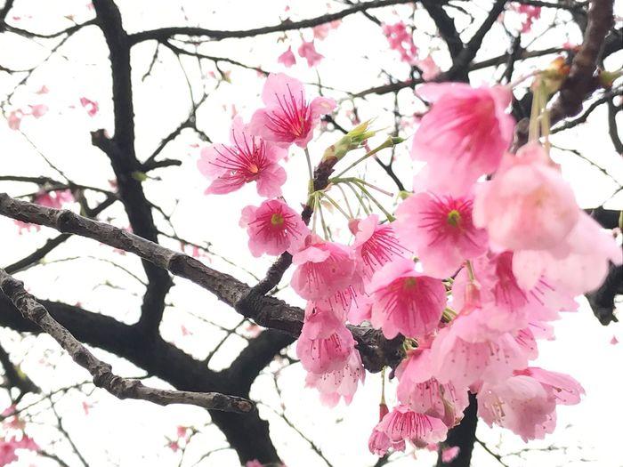 #flowers #flower #socialenvy #PleaseForgiveMe #petal #petals #nature #beautiful #love #pretty #plants #blossom #sopretty #spring #summer #flowerstagram #flowersofinstagram #flowerstyles_gf #flowerslovers #flowerporn #botanical #floral #florals #flowermagic #instablooms #bloom #blooms #botanical #floweroftheday