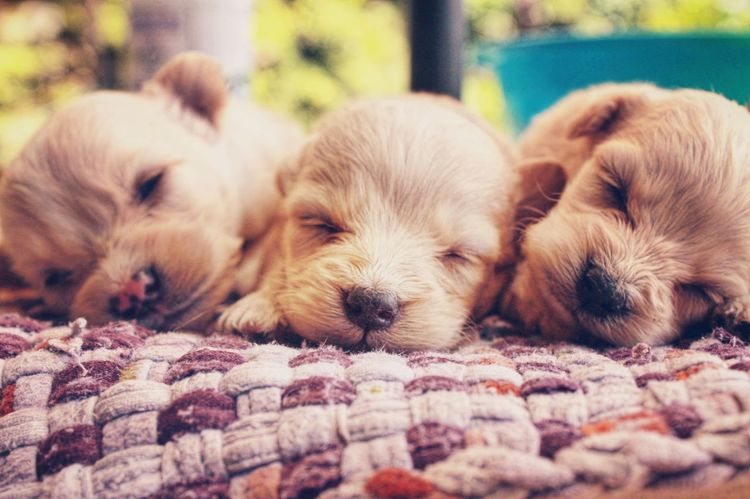 Domestic Animals Animal Themes Relaxation Mammal Pets No People Close-up Day Outdoors Puppies! Eyeem Philippines Puppies Today