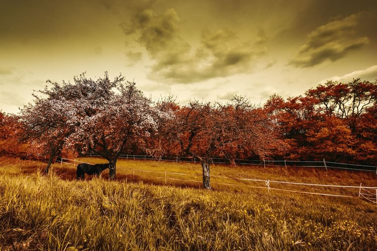 Eine kleine Pferdekoppel bei Andernach Sunset Autumn Colors Travelling Landscape Authentic Moments Andernach Tree Landscapes Silhouette Autumn Sunlight Orange Color Autumn🍁🍁🍁 Germany Beauty In Nature Outdoors Autumn Leafs No People Dramatic Sky Cloud - Sky Travel Farm Farmlandscape Horses Animals