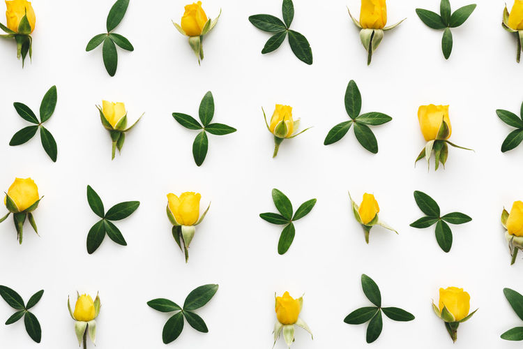Directly Above Shot Of Yellow Flowers And Leaves Arranged On White Background