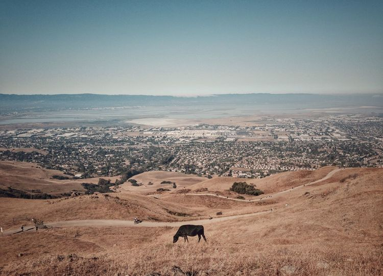 Nature On Your Doorstep California Drought Cows Hiking Hills Bay Area Sky