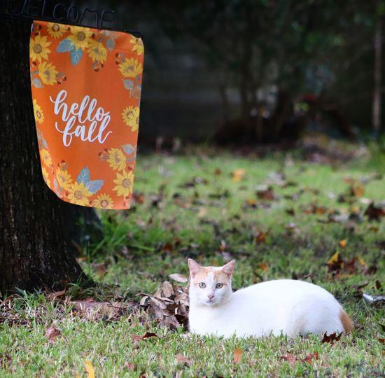 Fall finally