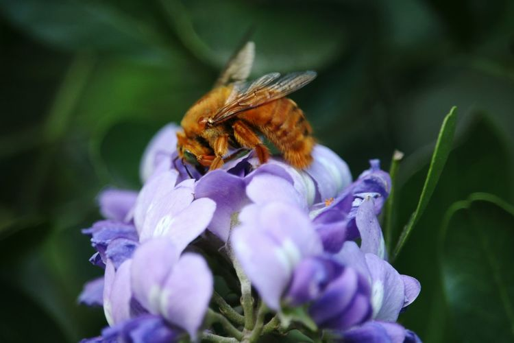 Insect Flower Plant Nature One Animal Animals In The Wild Animal Wildlife Animal Themes Beauty In Nature Purple Close-up
