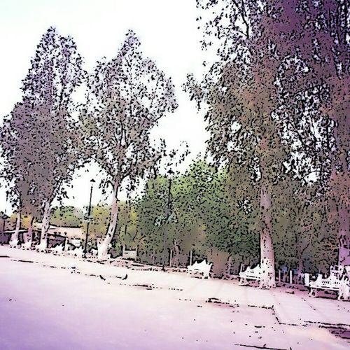 Sonora Magdalenadekino Trees Amazing pueblo place molome