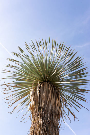 Low angle view of dried plant against clear sky