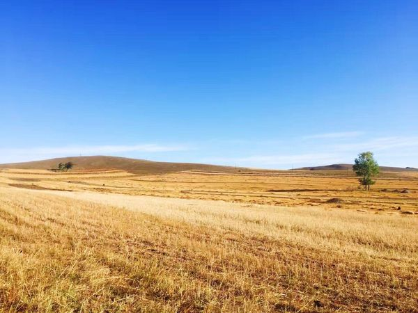Blue Landscape Desert Environment Clear Sky Sand Sky Scenics Nature Arid Climate Rural Scene Brown Tranquility Tranquil Scene Outdoors Sand Dune Beauty In Nature Day Horizontal