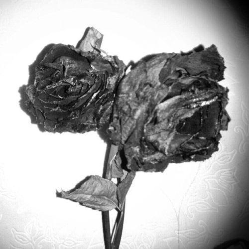 Rosen Liebe Iwillneverforget Schwarzweiß Blatt Stiel bestdayever