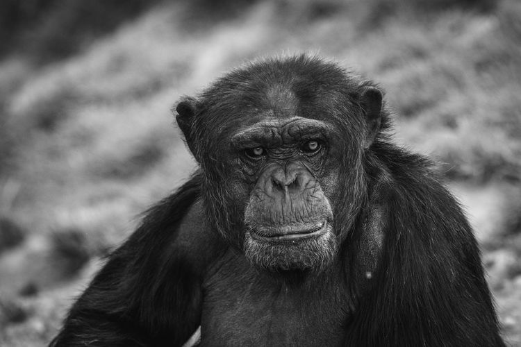 Portrait of young monkey outdoors
