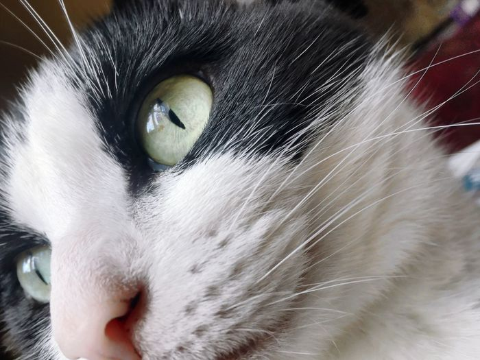 Eye4photography  Domestic Animals One Animal Pets Domestic Cat Cat Feline Whisker Close-up Animal Themes EyeEm Photography Eyeem Photography Eyeemphotography Cats Animal Cats Of EyeEm EyeEm Animal Lover Catsofinstagram