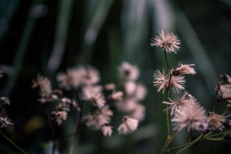 Plant Flowering Plant Flower Beauty In Nature Growth Freshness No People Tranquility Uncultivated Vulnerability  Dry Selective Focus Outdoors Flower Head Focus On Foreground Fragility Nature Close-up Green Color EyeEmNewHere