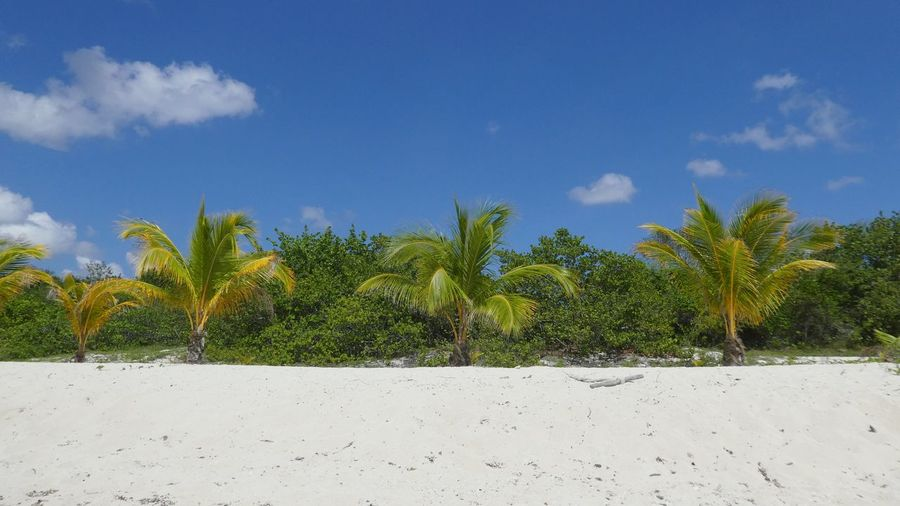 alone at white sand beach with palms Loneliness Caribbean Paradise Blue Sky And White Clouds White Sand Beach Untouched Nature Travel Summer Vibes EyeEm Gallery EyeEm Selects EyeEm Nature Lover View From Water Travel Destinations Summer 2018 Tree Beach Sand Palm Tree Blue Sky Cloud - Sky Coconut Palm Tree Tranquil Scene Tranquility Scenics Shore Idyllic Tropical Tree Sand Dune Plant Life Calm