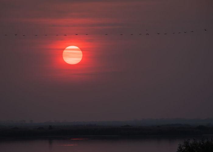 cranes sunset