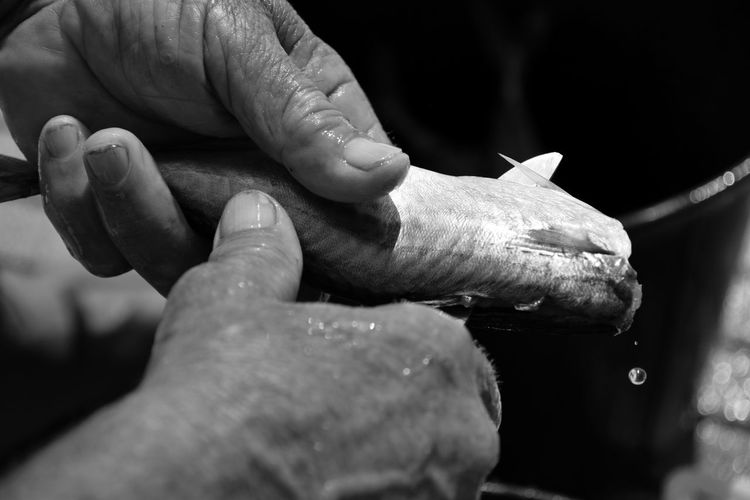 Cropped hands of person cutting fish