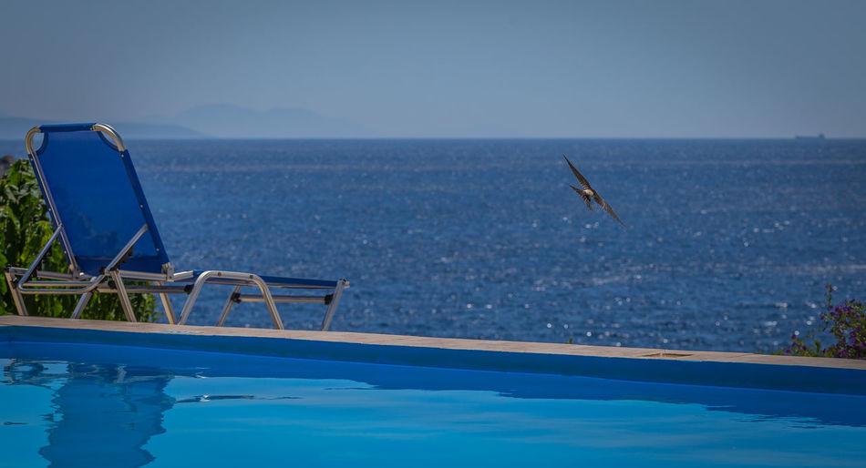 Bird flying over infinity pool against sky