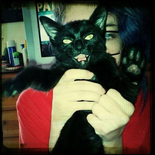 Mad Cat Lookin Crazy