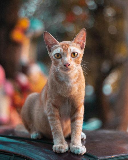 cat Cat Sitting