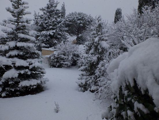 Snow Winter Cold Temperature Nature No People Tranquil Scene my garden this week-end.